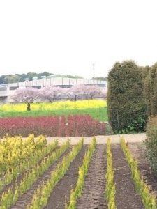 農道から望む農耕地