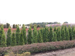 植栽用の畑